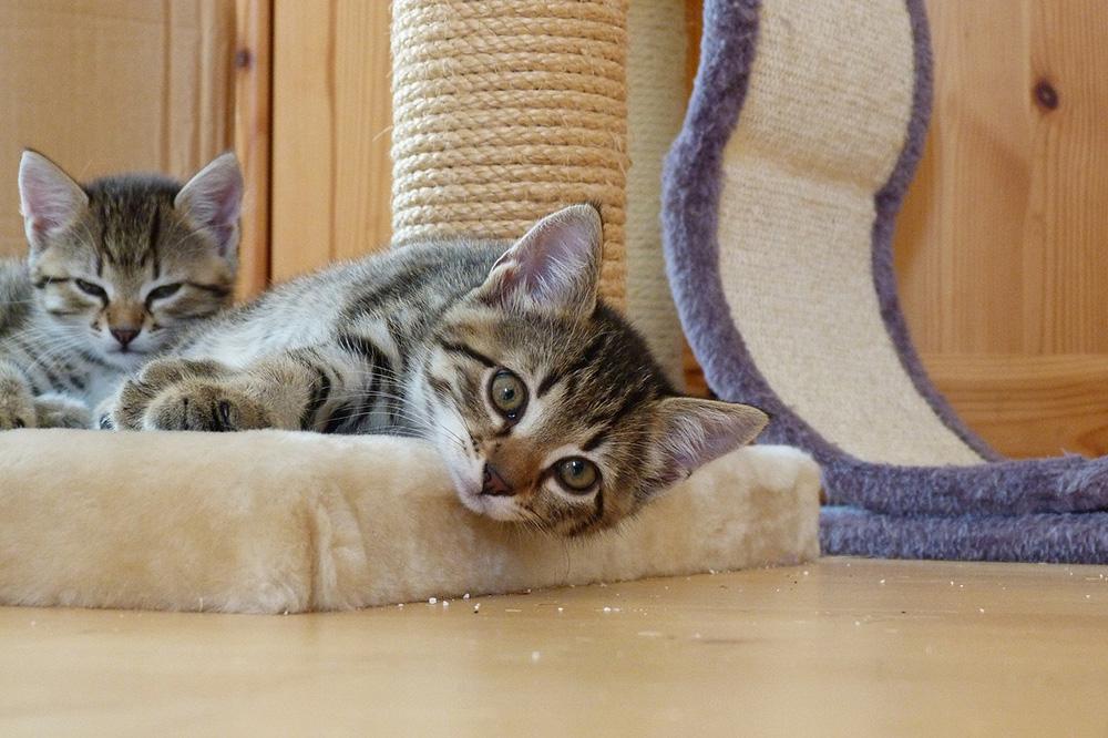 indretning-katte